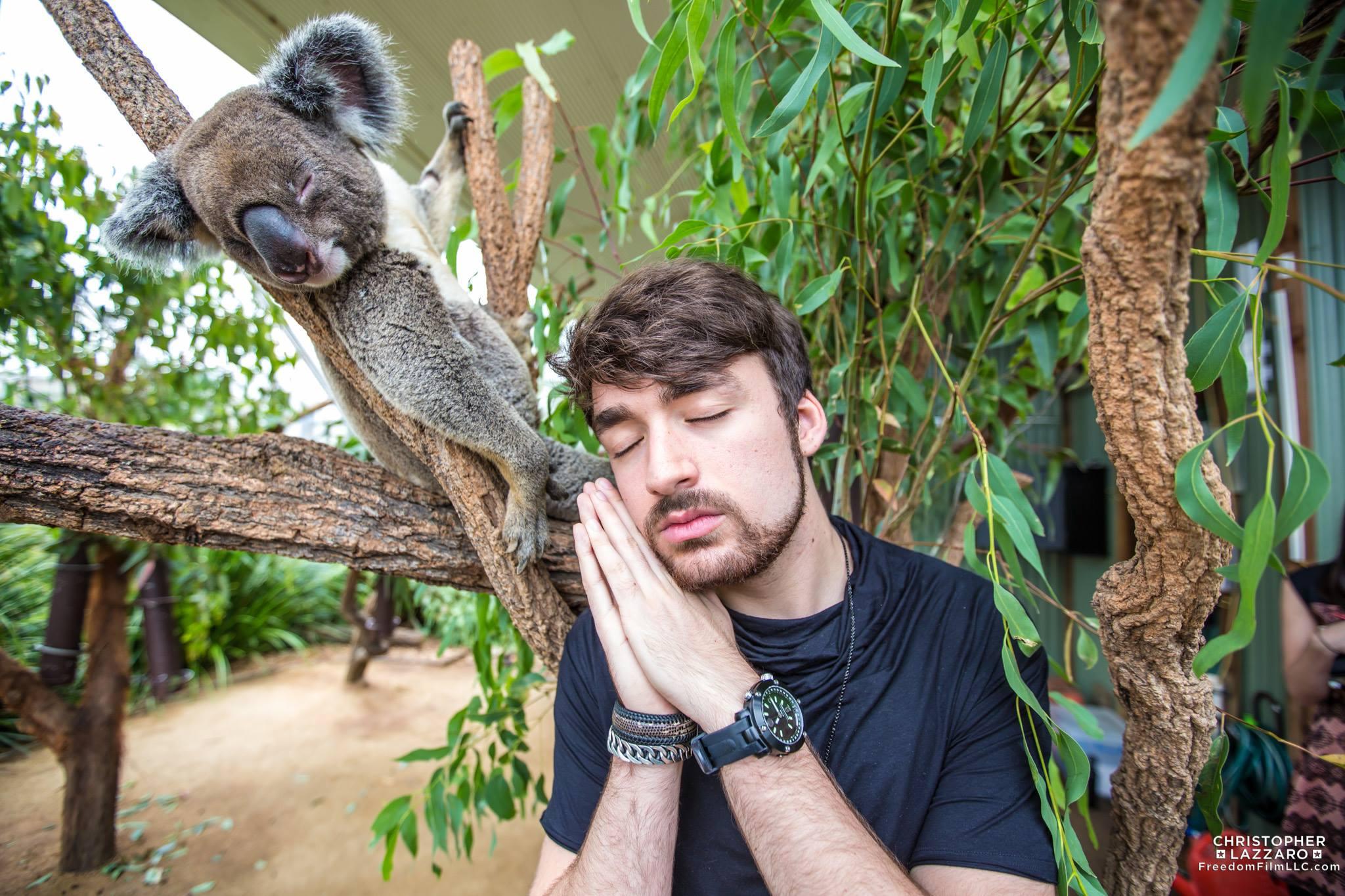 oliver-heldens-koala